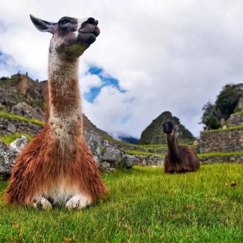 Pacotes individuais 2021 para Lima e Cusco